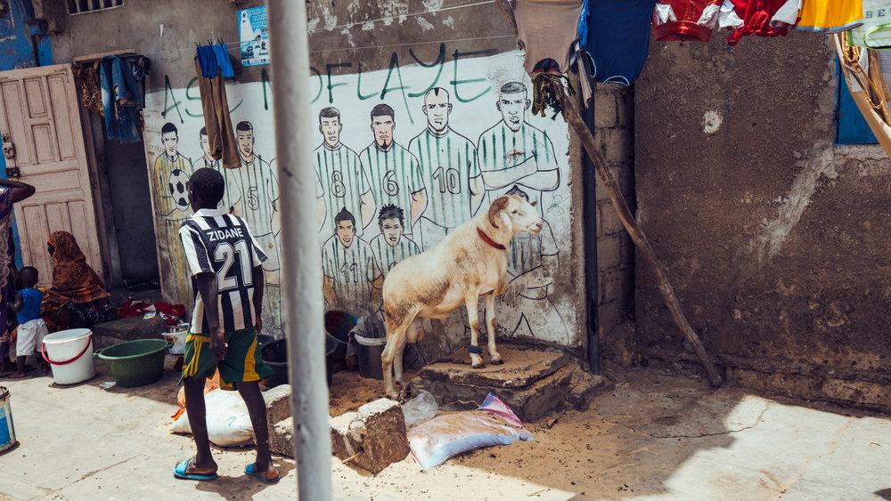 Senegal-16-9-34.jpg