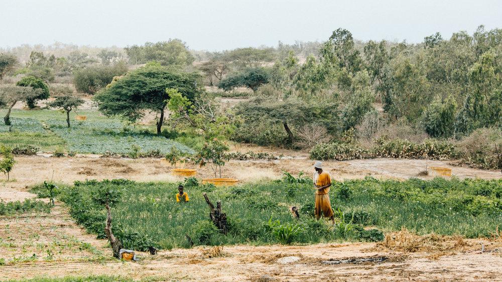 Senegal-16-9-57.jpg