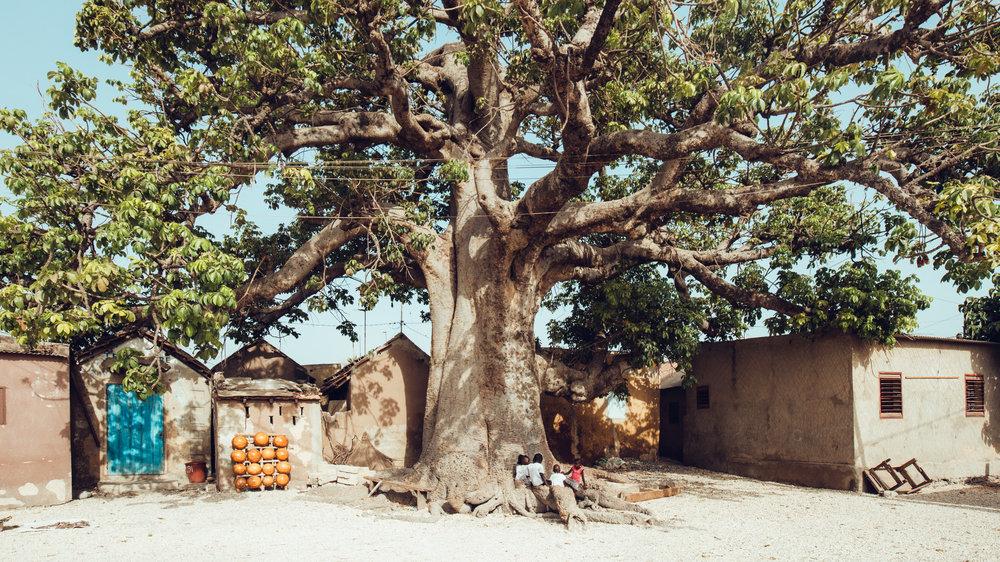 Senegal-16-9-81.jpg