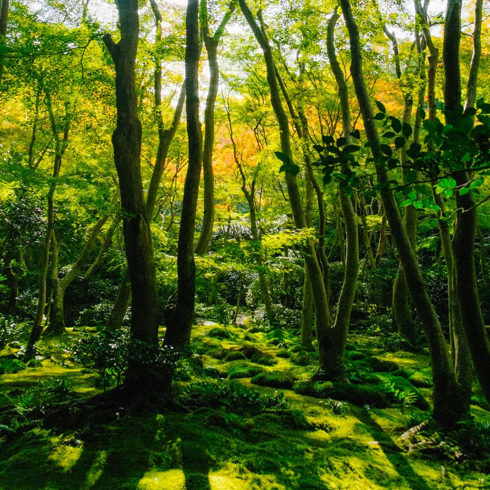 20131107-08 Kyoto_359_highres.jpg