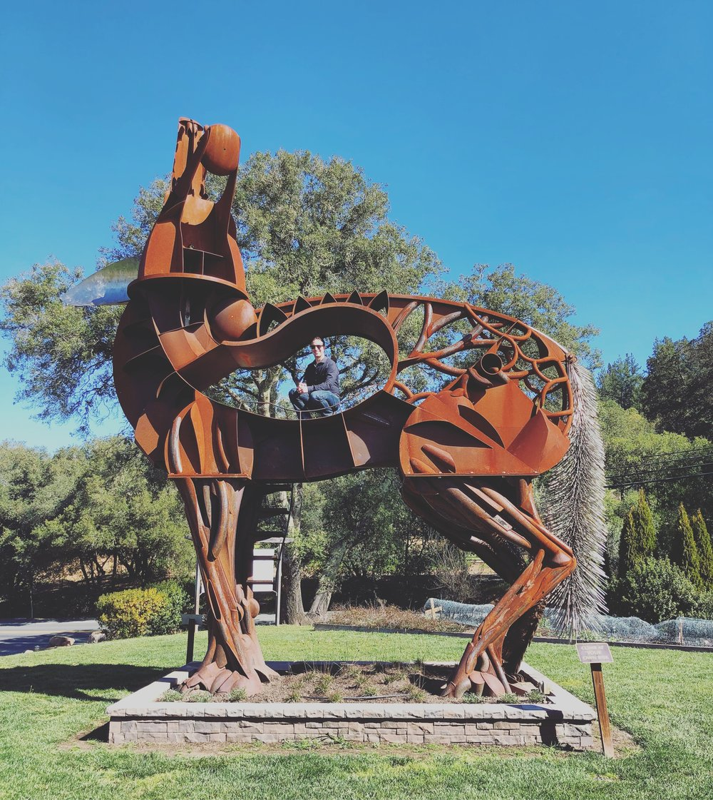 Phil climbing the coyote sculpture (from Burning Man) at Wilson Winery
