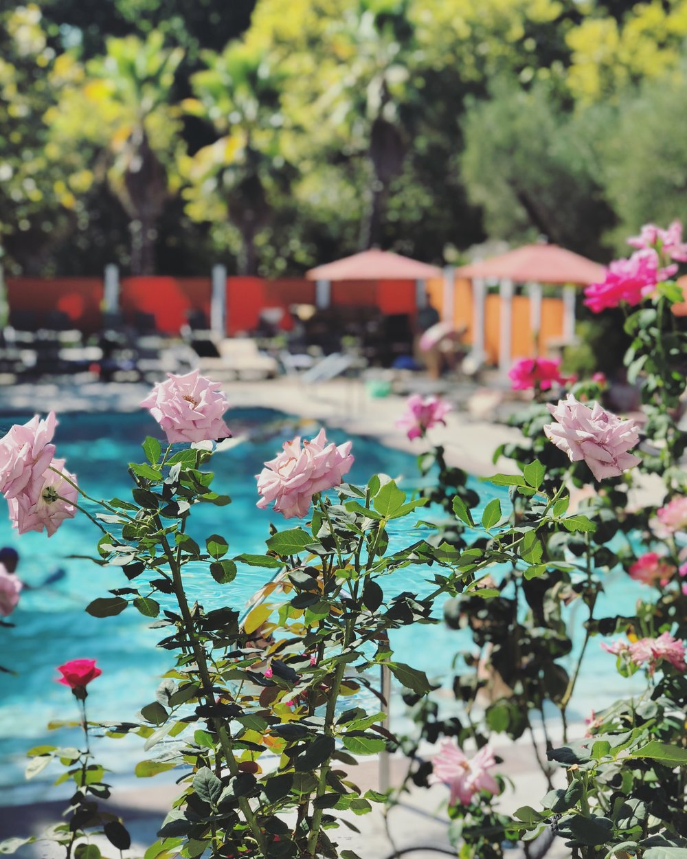 "Flowers surrounding the smaller ""adult"" pool"