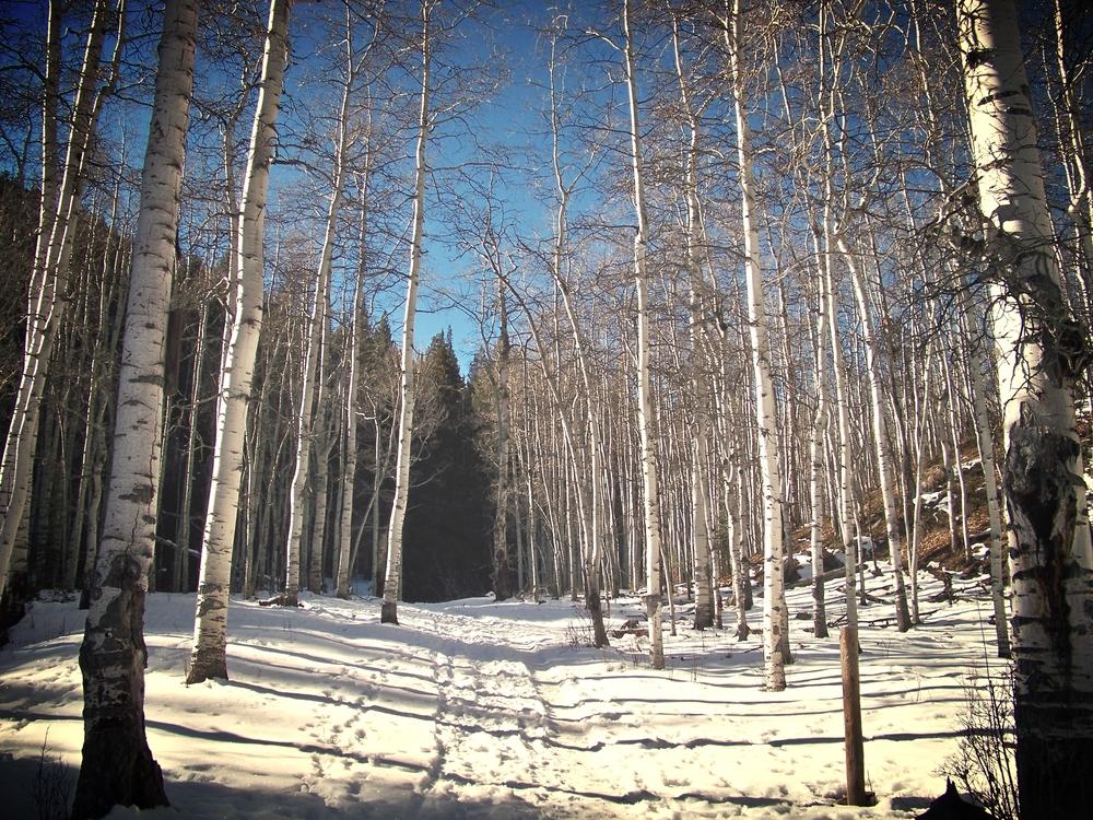 aspen_snow.jpg