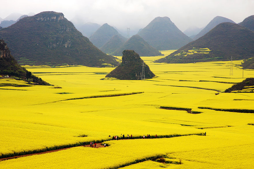Studded-Hearts-moodboard-inspiration-1-Canola-Flowers-Field-China.jpg