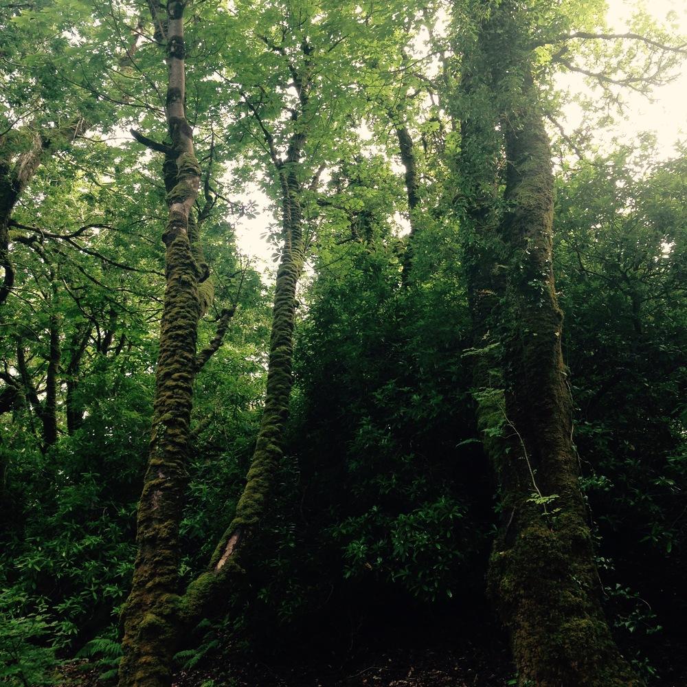 Ireland's lush greenery