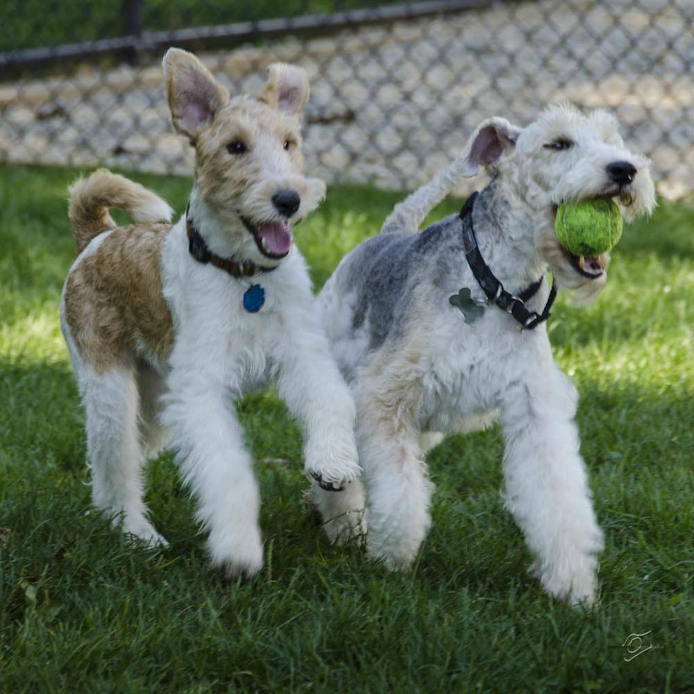 Chauncey & Chudleigh