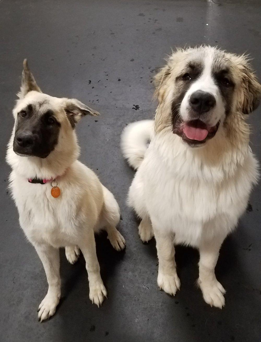 Tiki and Roscoe