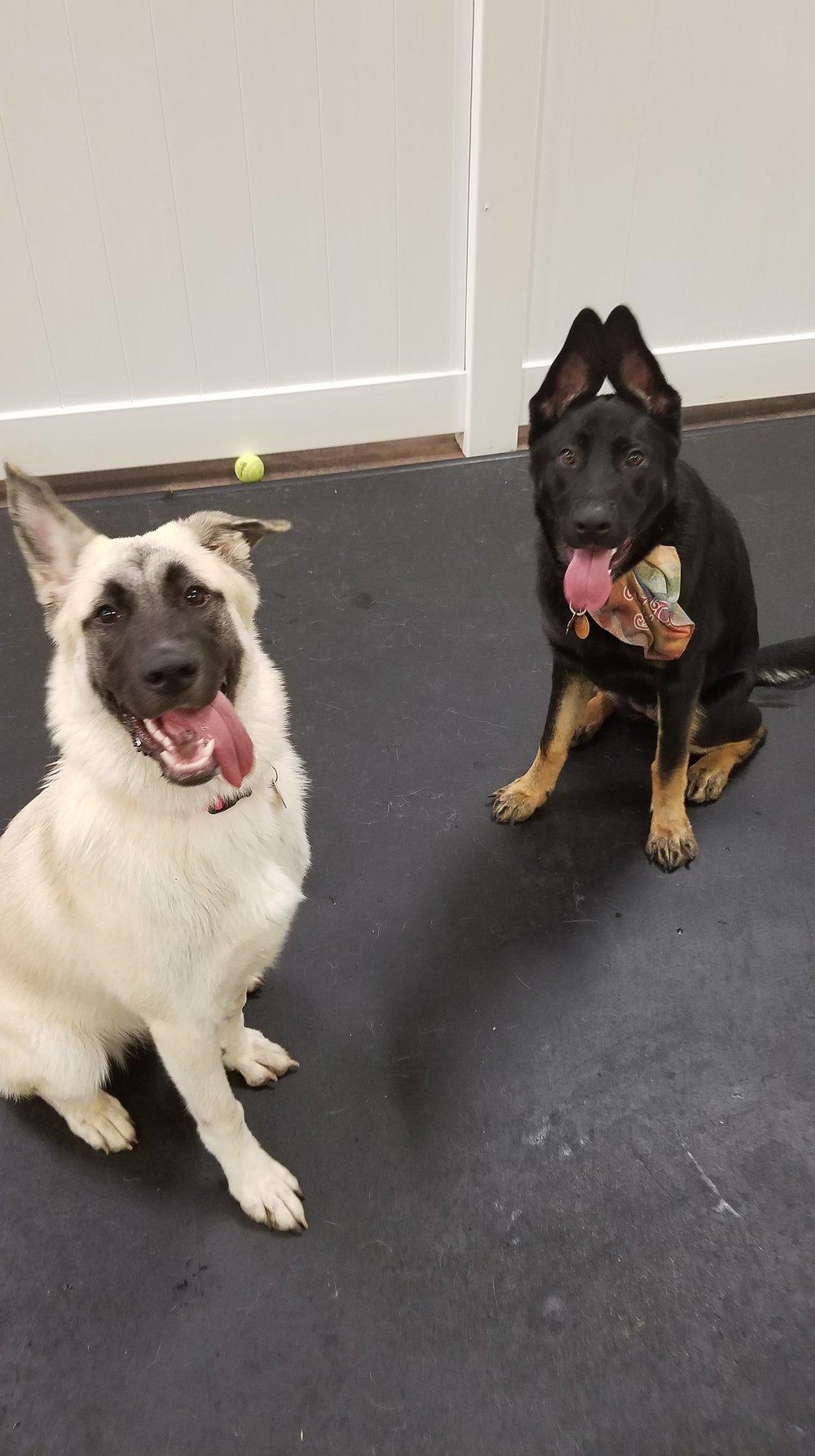 Tiki & Bella