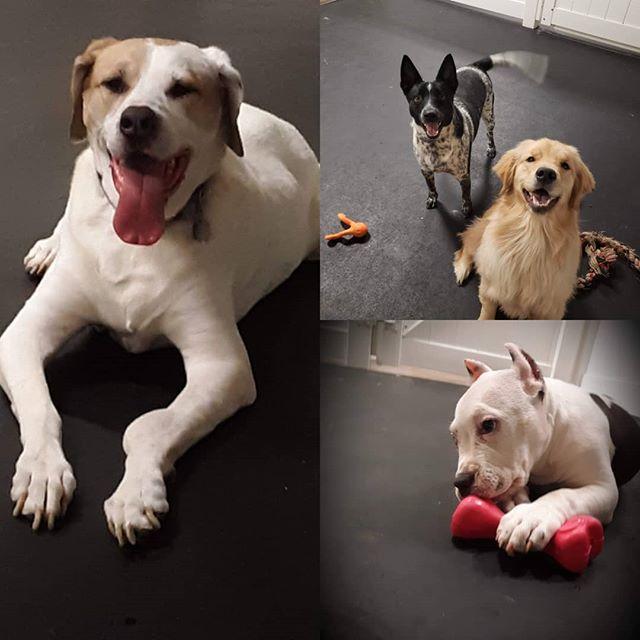 Happy pups!!! #dawgparadise