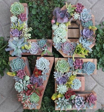 PC: Etsy / Succulent Wonderland