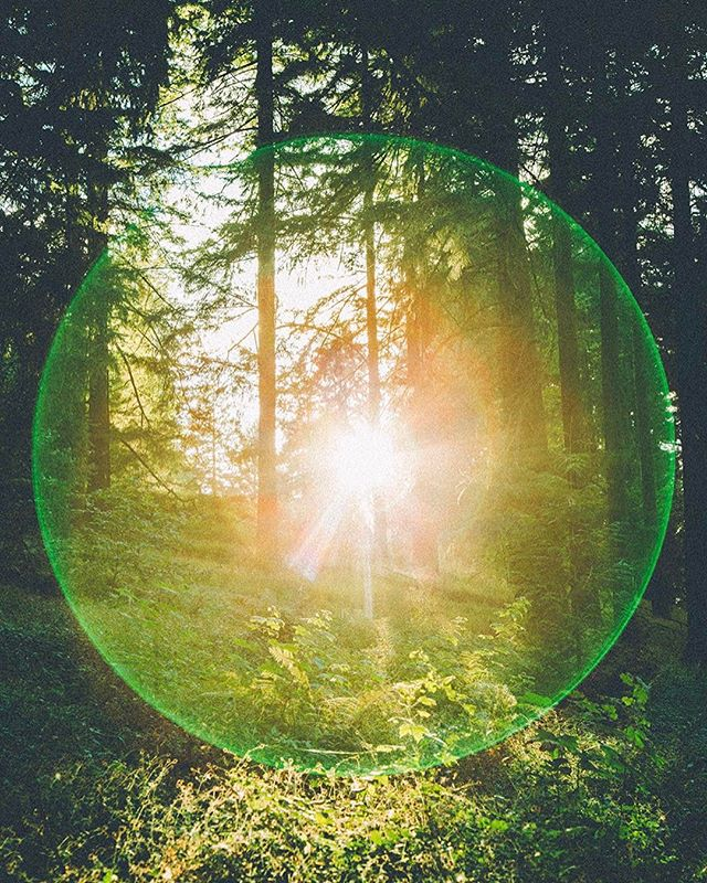 Orbs are real. -------------------------------------------------------------------------------------------------------- #canon #canon5d #canon_photos #canoneos #canonphotography #canonphoto #canon5dmarkiii #canon_official #orb #orbs #naturephotography #lensflare #filmmaking #filmmaker #videoproduction #oxbowfilm #oregon #portland #portlandoregon #hiking #hikingadventures #mttabor #vsco #light #forest