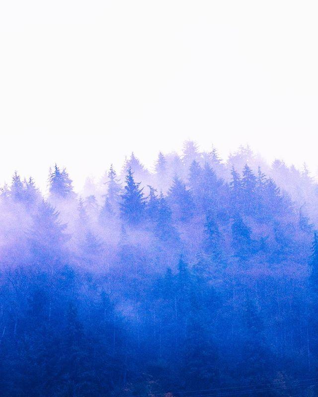 Fog --------------------------------------------------------------------------------------------------- #oxbowfilm #fog #canon5d #canoneos #canon #canon_photos #canon5dmarkiii #5dmarkiii #naturephotography #oregon #pnw #vsco #canonphotography #canon_official #clouds #grainyfilm #filmgrain #filmmaker #videoproduction #portland #oregoncoast