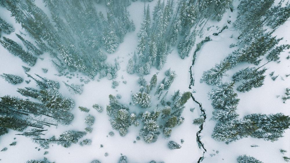 Spencer-Gentz-Snow-trees.jpg