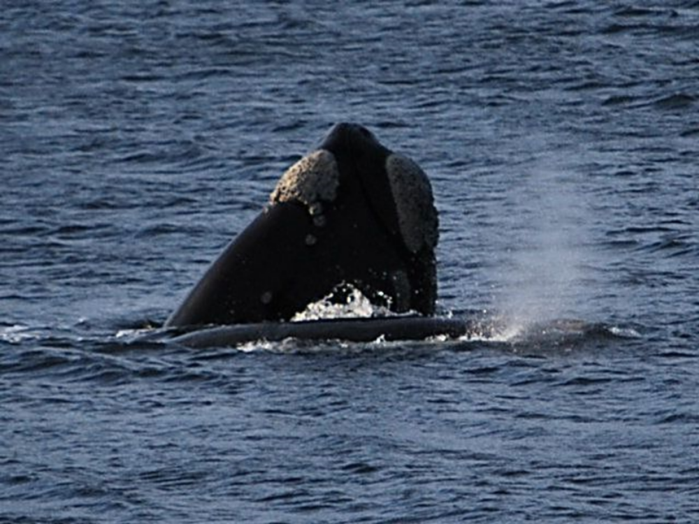 a whale and her baby in our bay
