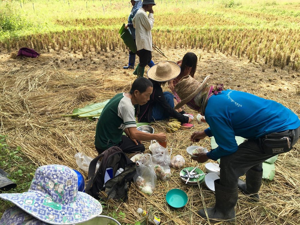 Soup break in the rice fields