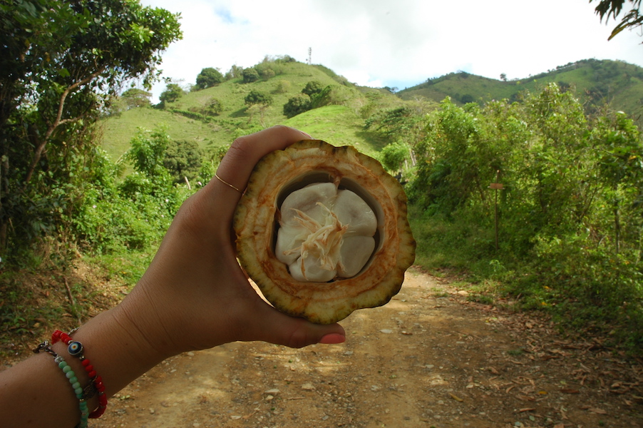 We snacked on a Cacao bean, which you have to try! They are fleshy and taste delicious.