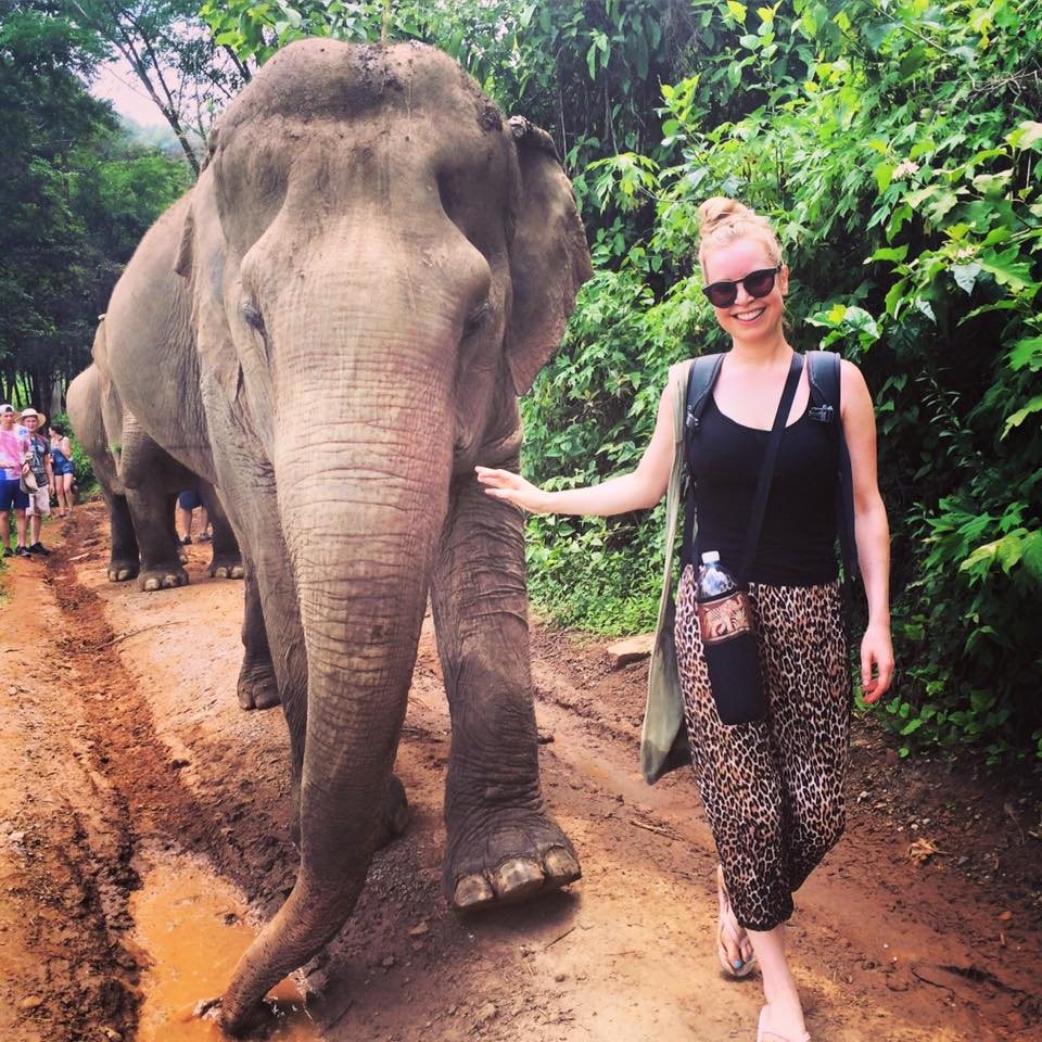 Before I embarked on my one week of volunteering with dogs, I spent a day walking with elephants. The Elephant Nature Park in Chiang Mai homes rescued ellies from the logging trade and tourism – no riding allowed and quite right too!
