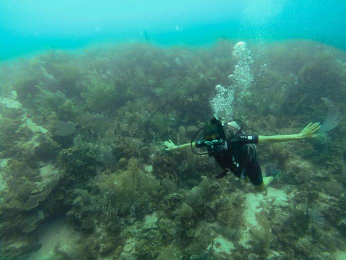 Diving in Honduras