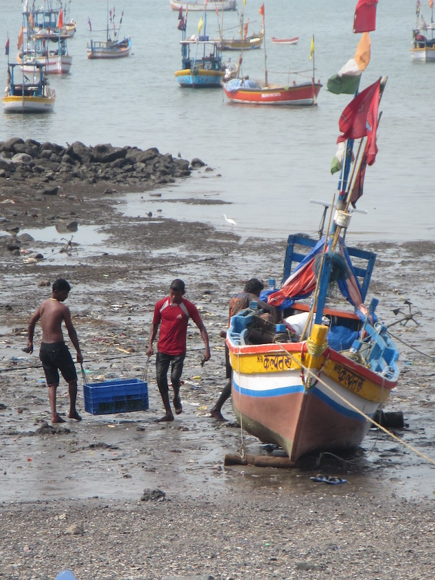 Fisherman bringing in the day's catch in Mumbai.