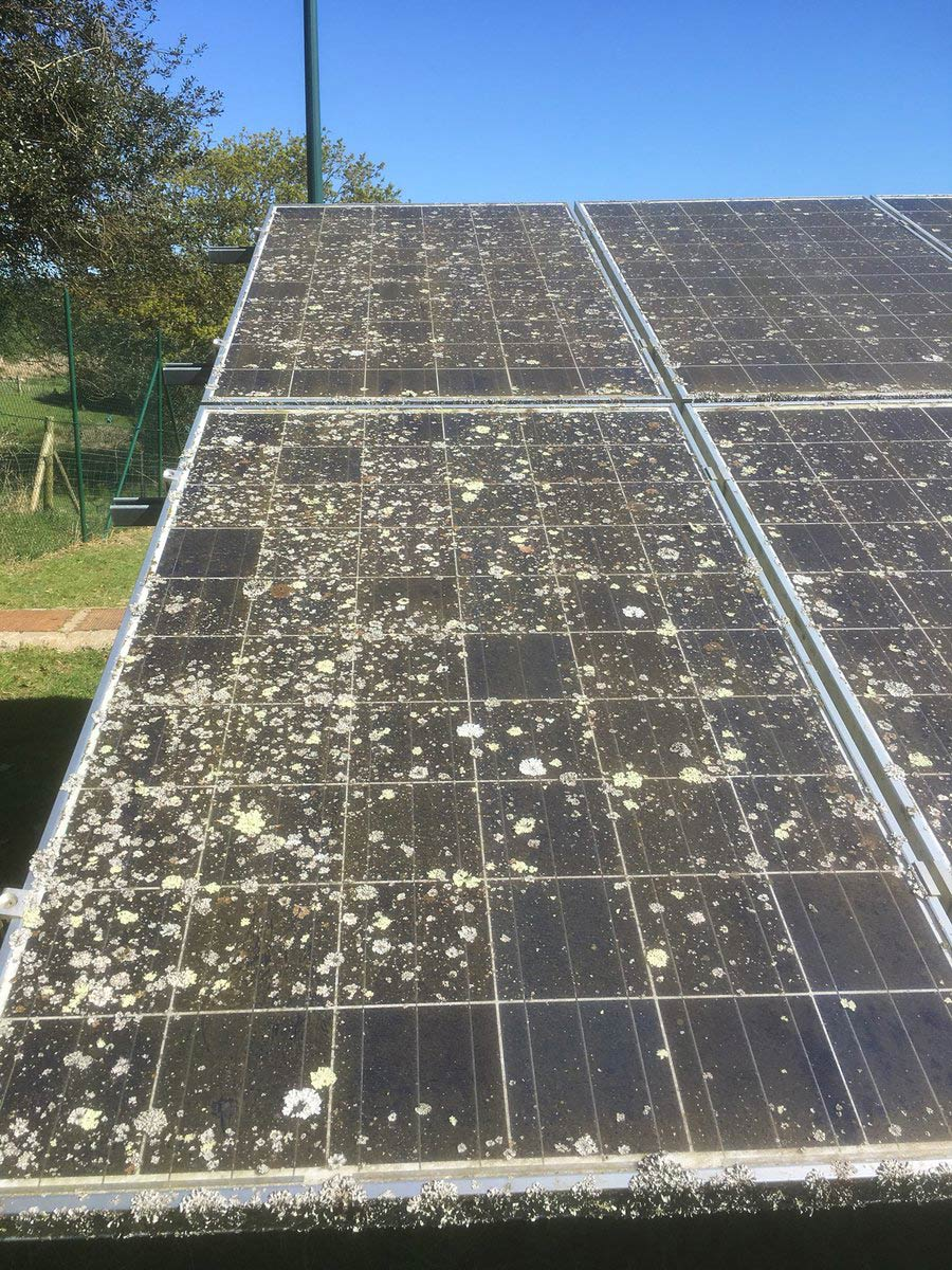 Solar-Sparkle-Lichen.jpg