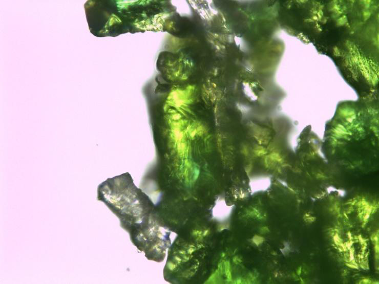 Initial sample of (DEA)2CuCl4 using a 50X objective. The sample has a strong green colour.