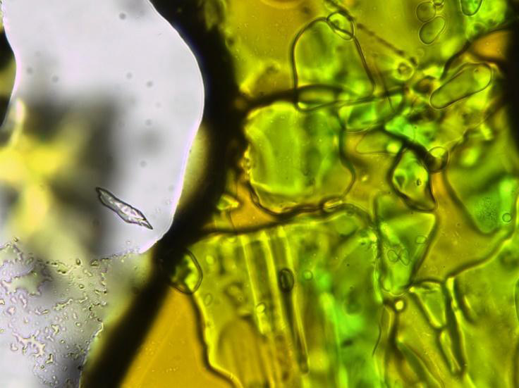 Melted sample of (DEA)2CuCl4  at 50°C, note a change in colour from green to an orange-green.