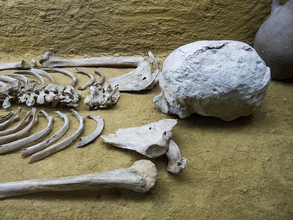 femur bone.jpg