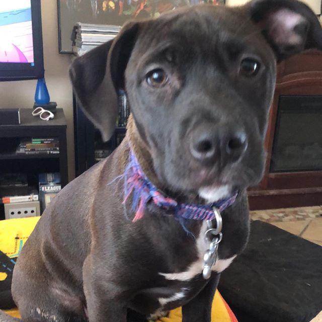 Happy National Puppy Day! #pitbull #puppy