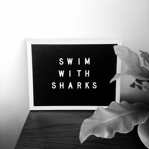 Shop online at Swim With Sharks™ by clicking HERE; use the code THANKS2015 at checkout to receive 20% off your purchase - ONLY THROUGH FRIDAY!