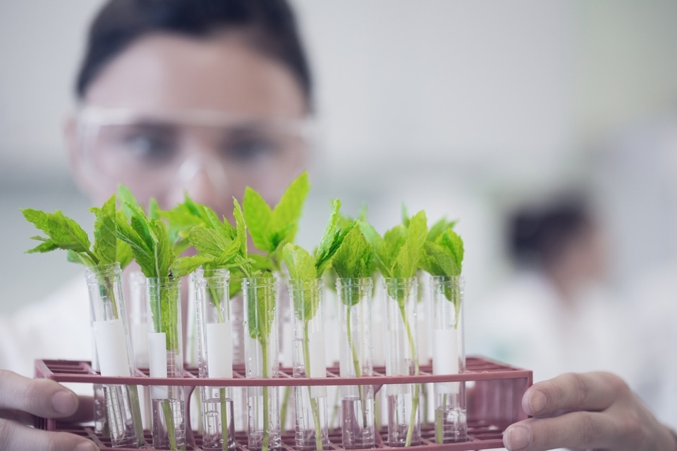 Close-up of a female scientist with young plants at the laboratory.jpeg