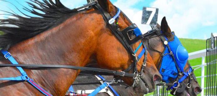 redshores Raceway & Casino