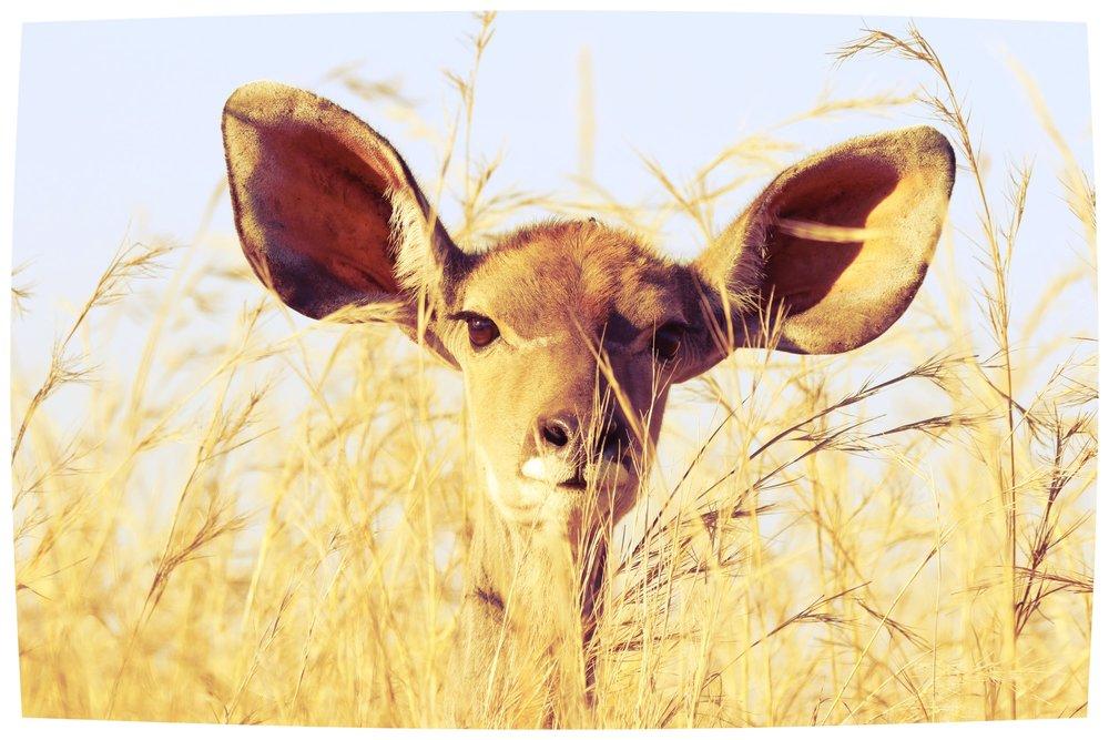 animal-animal-photography-barbaric-561870.jpg