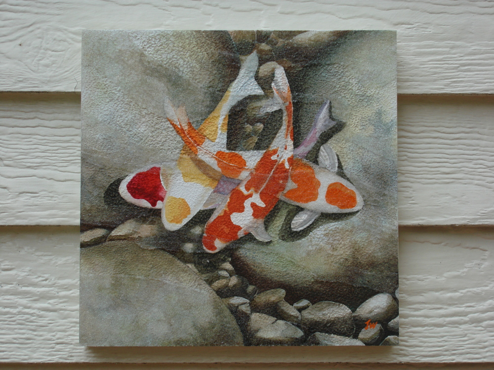 Koi on Rocks, 10x10, watercolor, 250.JPG