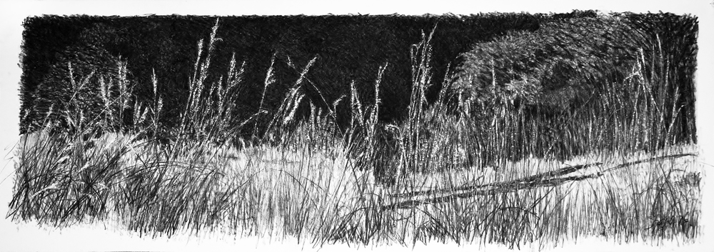 Waving Grasses   Charcoal on paper 44 x 15 in.  2013