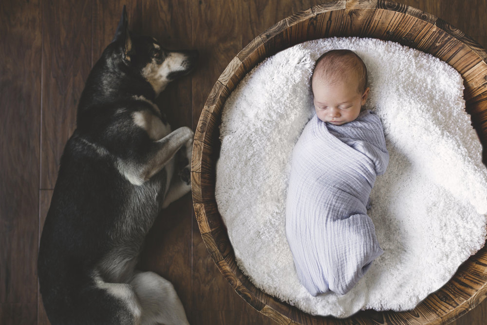 Adam-Szarmack-Newborn-Portrait-Dog.jpg