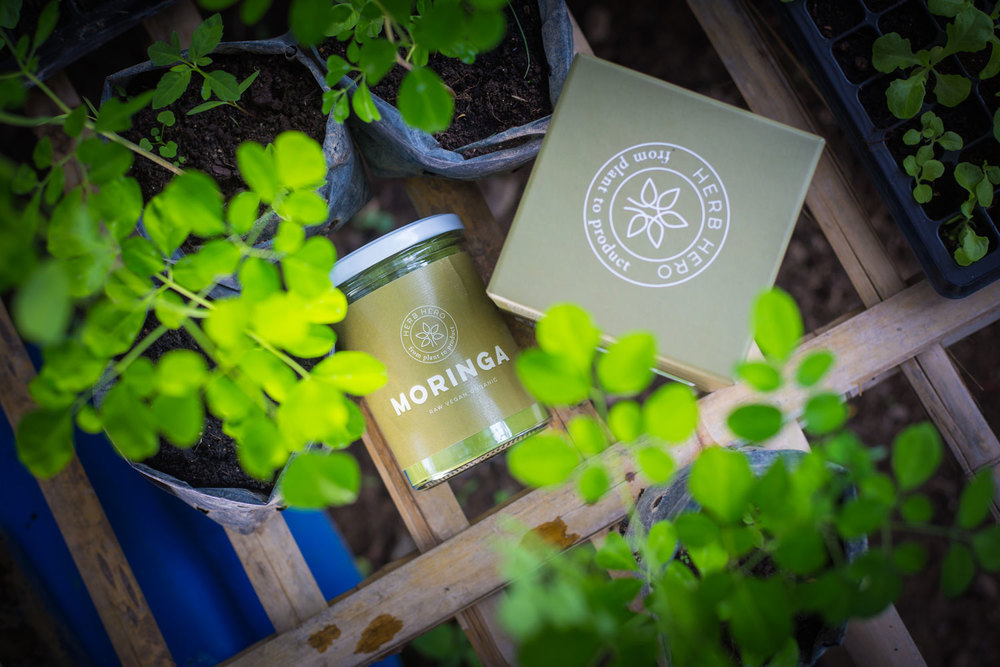 Herb Hero Moringa package with young moringa plants