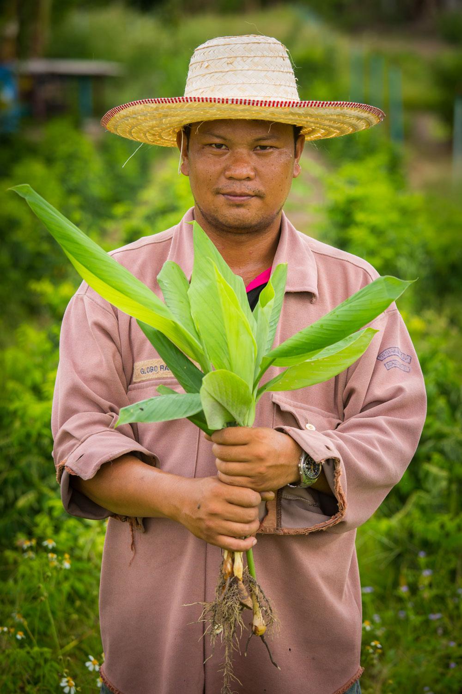 Herb Hero Turmeric farmer