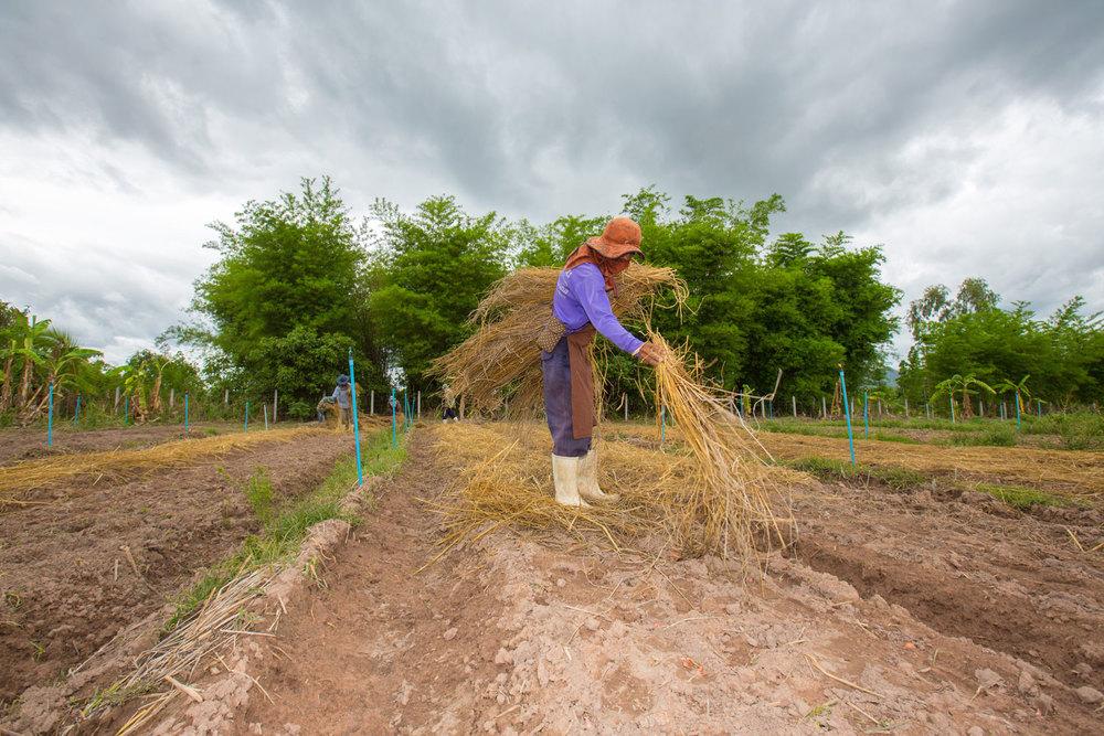 Herb Hero farmer with grass
