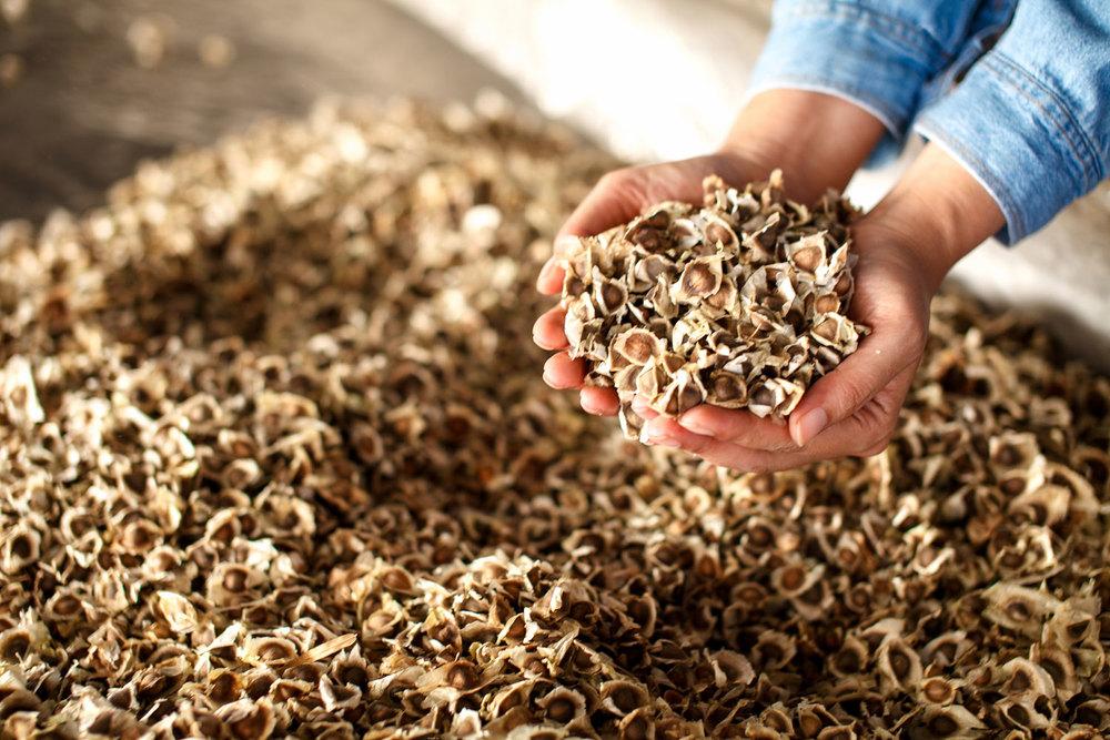 Herb Hero Moringa seeds