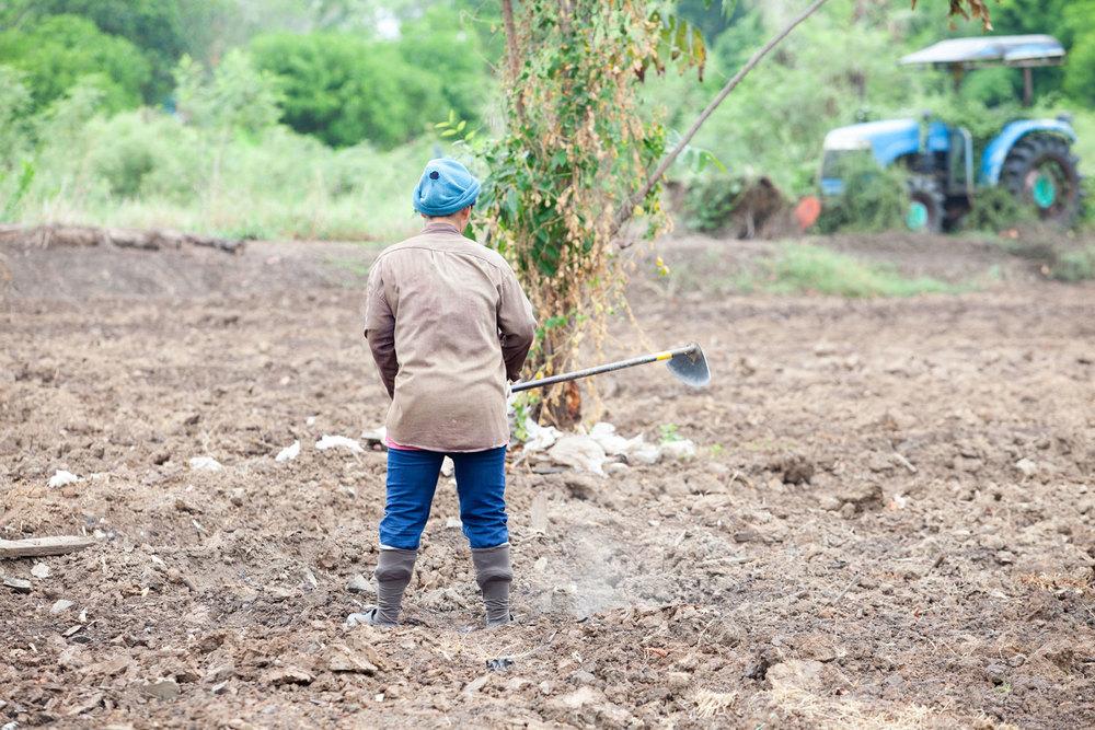 Herb Hero farmer in field