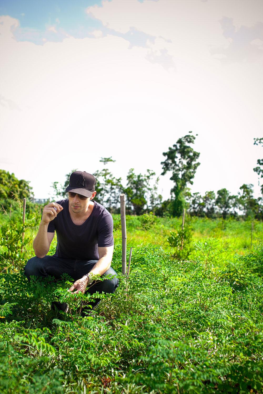 Herb Hero Jimmy in young moringa field