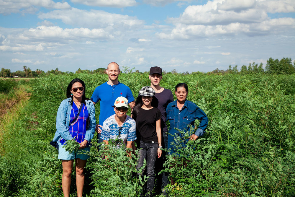 Herb Hero Team in Moringa field