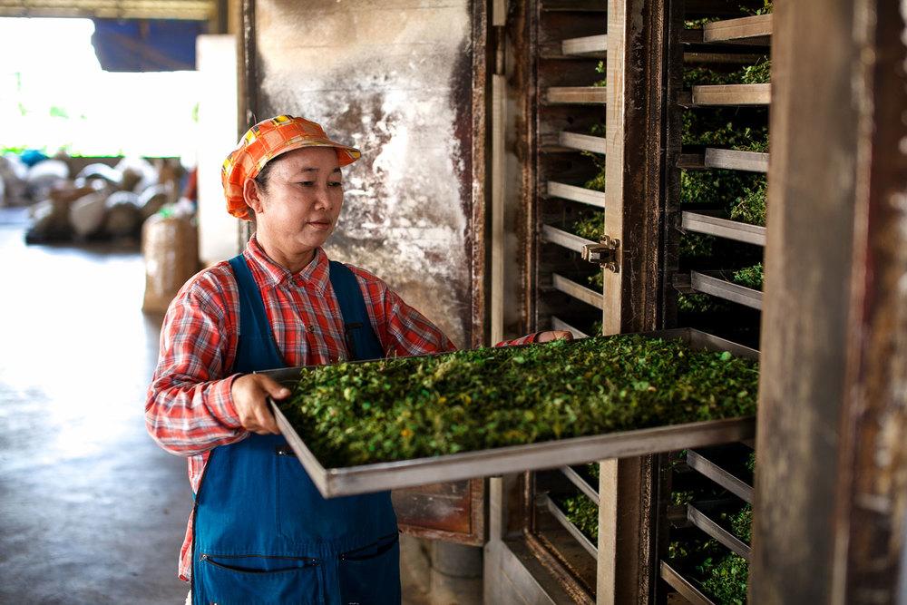 Drying Herb Hero Moringa