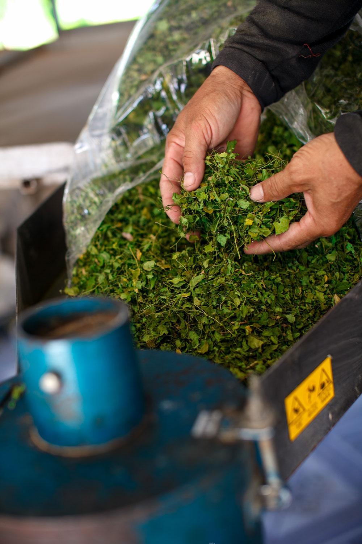 Processing Herb Hero Moringa