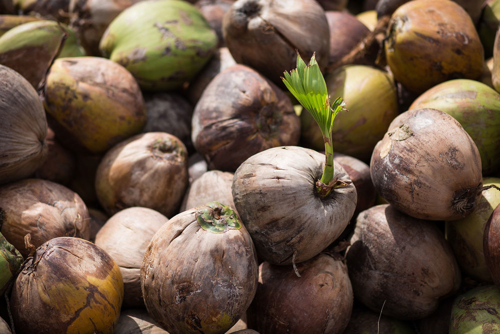 Herb Hero fresh coconuts