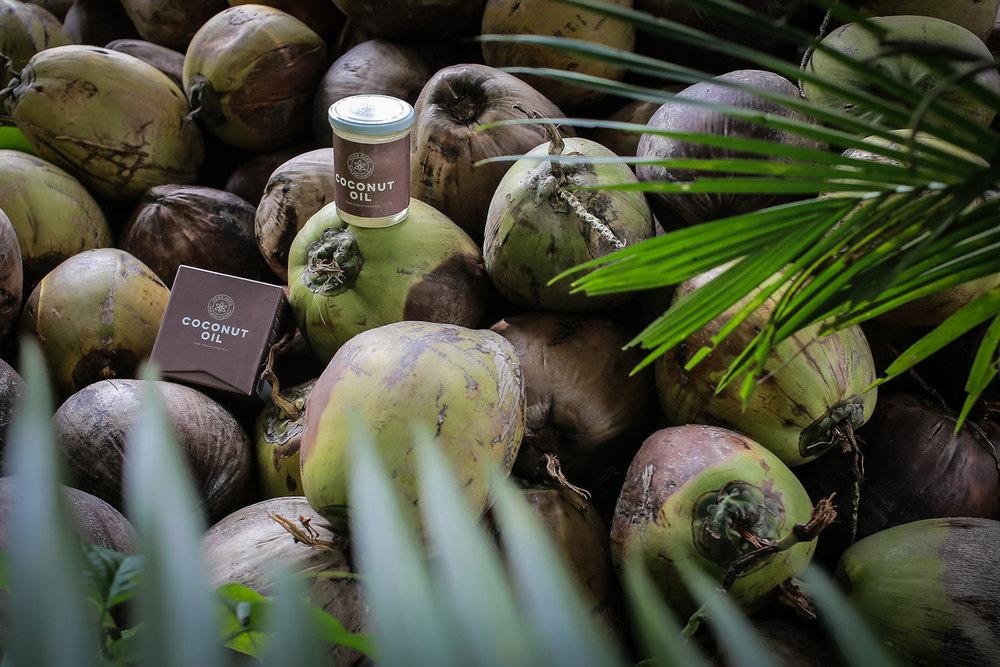 Herb Hero Coconut oil on fresh coconuts