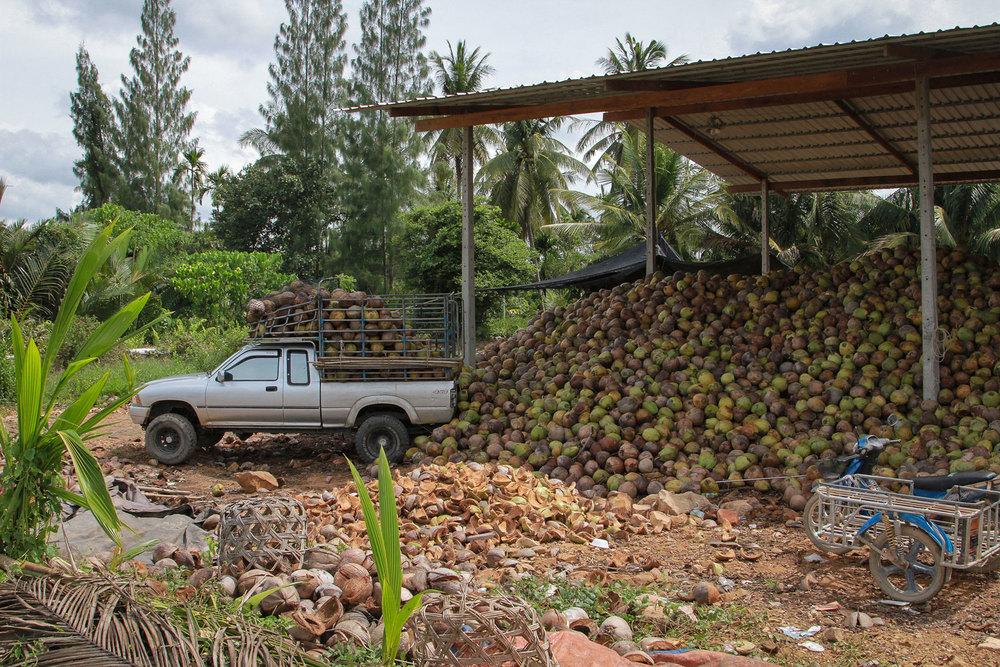 Herb Hero coconut factory