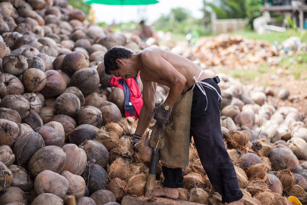 Herb Hero coconut farmer