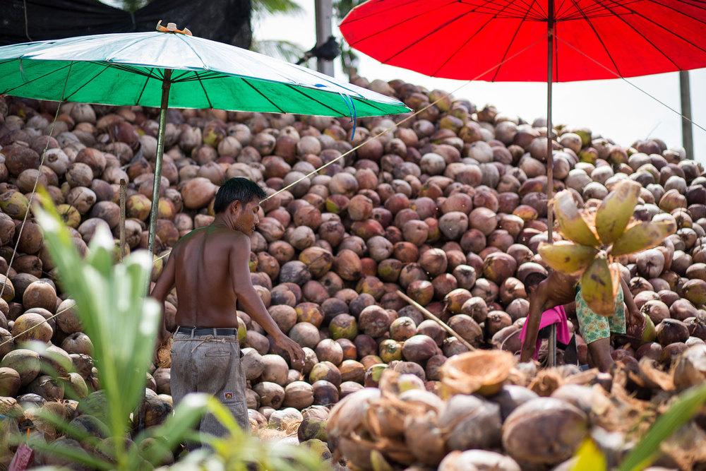 Herb Hero coconut farmers