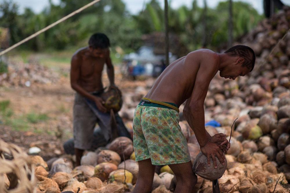 Herb Hero Coconut oil farmers